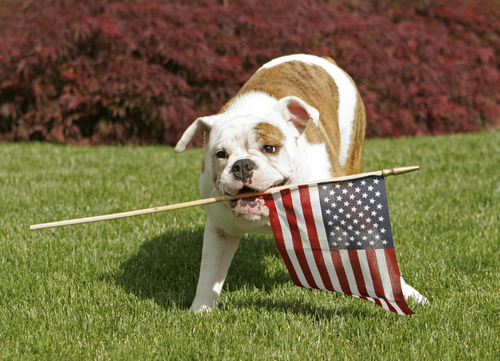 Happy-Memorial-Day-2014-Dog-Image-Wallpaper-17